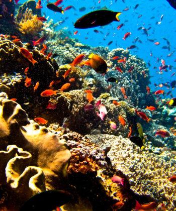 scuba_diving_2